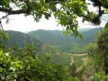 2011 tigrenok foto denisa andreevicha 054