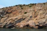 2012 tigrenok - kupanie v otkrytom more 035