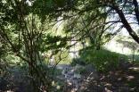 2012 tigrenok 3 sm 12 den  006