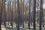 2019 pohod lisichansk gsm 5 aprelya 007