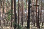 2019 pohod lisichansk gsm 5 aprelya 025