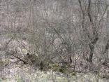 2019 pohod severodoneck gsm 28 marta 040